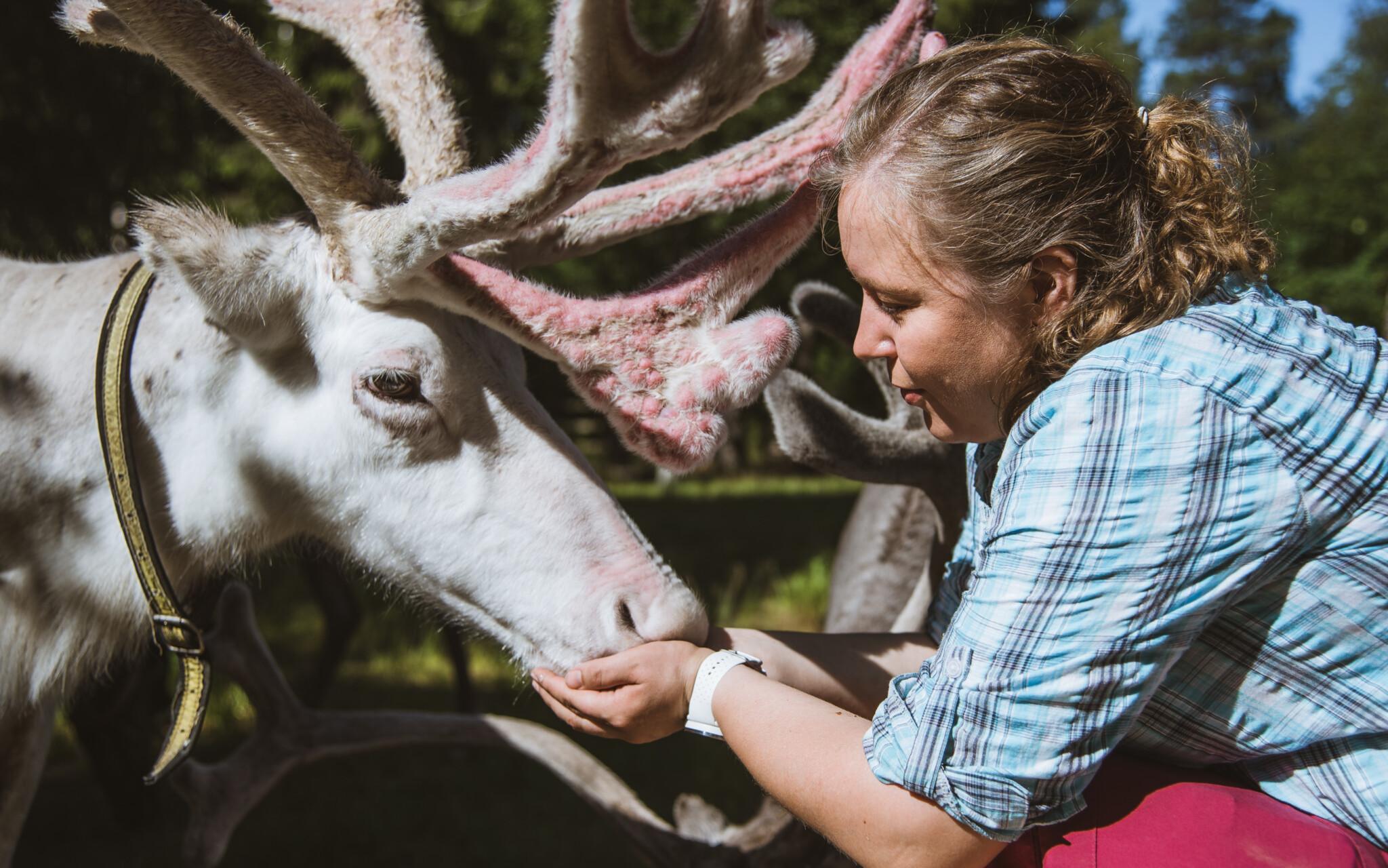 Miia Merkku Year of reindeer Lapland Finland Rovaniemi