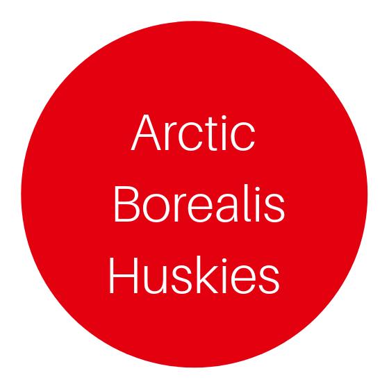 Arctic Borealis Huskies in Ranua, Lapland, Finland