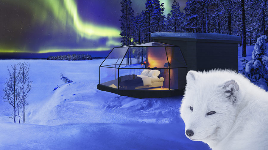 arctic fox igloos in ranua lapland finland visit rovaniemi. Black Bedroom Furniture Sets. Home Design Ideas