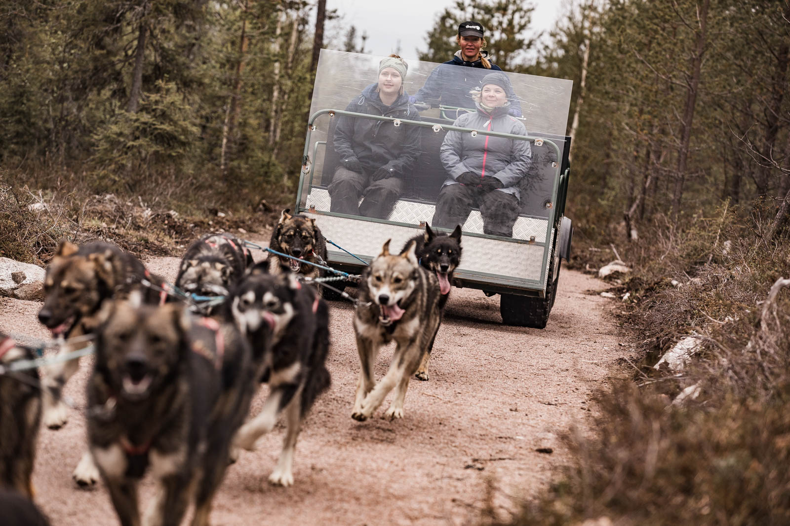 Bearhill Husky Rovaniemi Lapland Finland