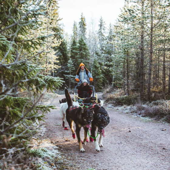 Bearhill Husky autumn tour in Rovaniemi Lapland Finland