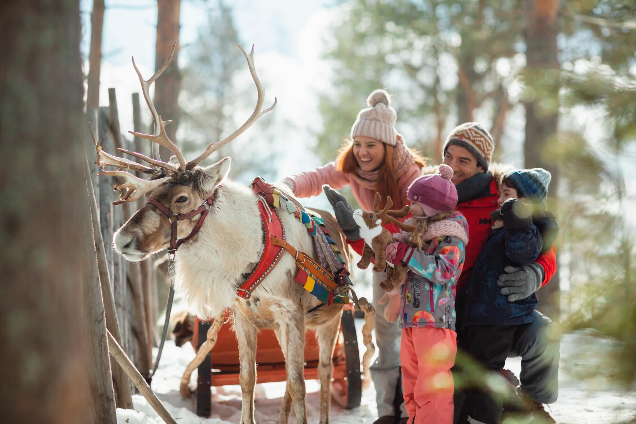 Changed By Rovaniemi Santa Claus Reindeer, Rovaniemi, Lapland, Finland