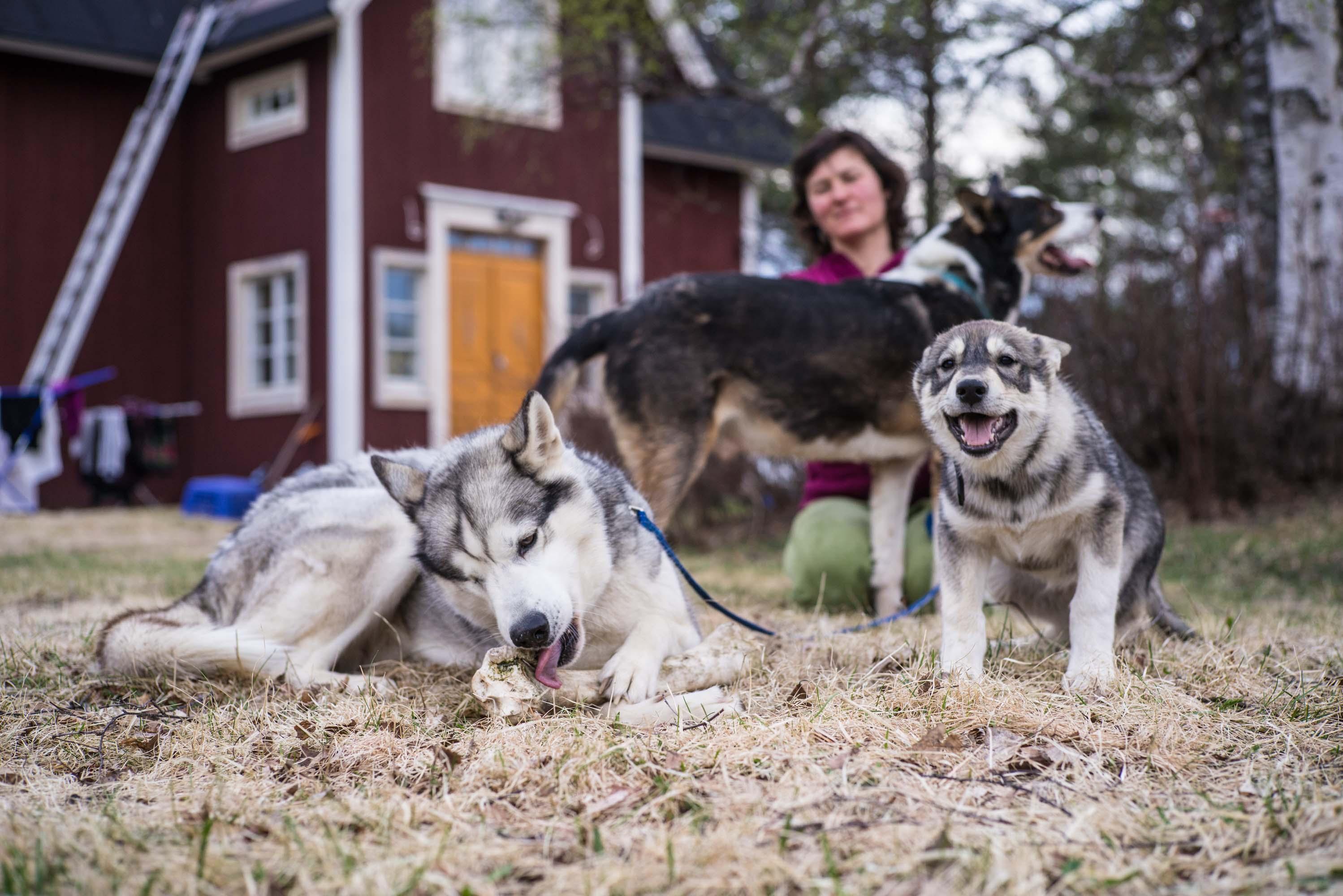 Husky Yoga & Nature, Rovaniemi,. Aksana Kurola
