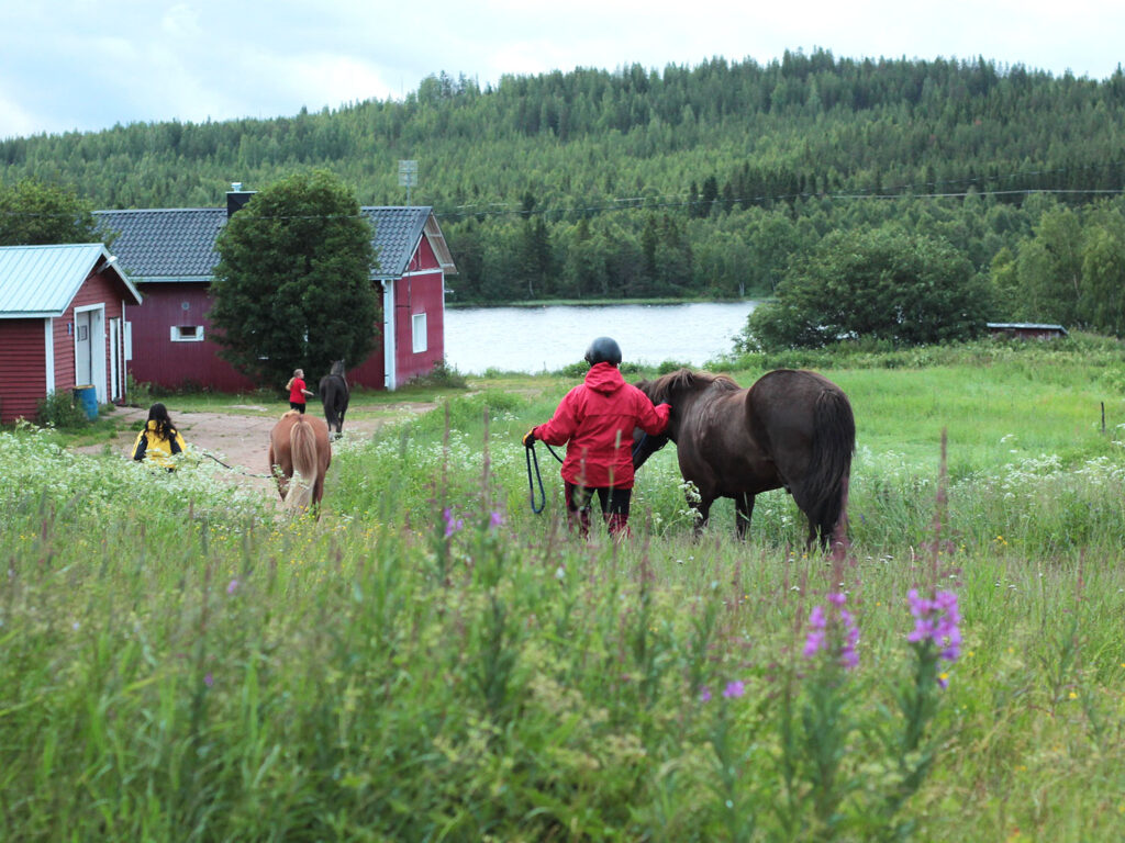Horseriding with Arctic Nature Trips in Rovaniemi Lapland Finland