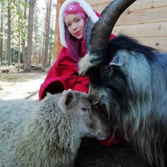 Sheep and goat at Elf's Farm Yard Petting Zoo in Rovaniemi, Lapland, Finland
