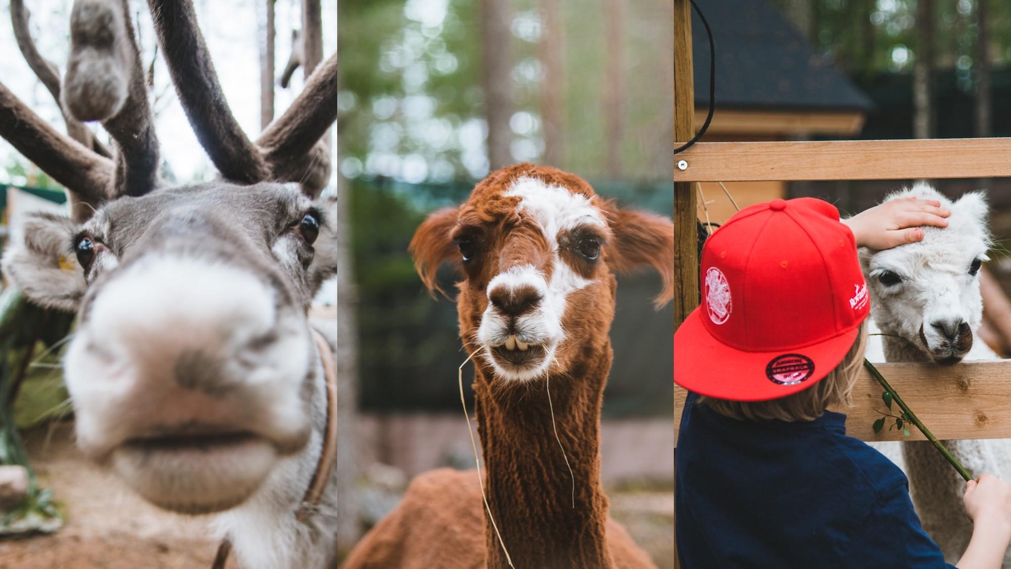 Joulupukin Pajakyla elainystavat Santa Claus Village animal friends Elf´s farmyard Tallitontun piha