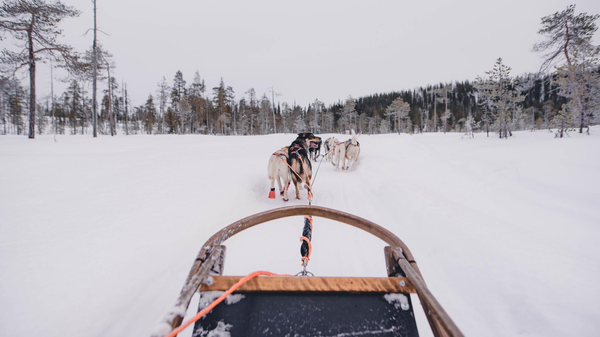 Pinewoods Huskies Rovaniemi, Lappi