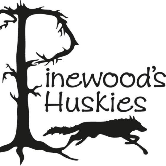 Pinewood's Huskies in Rovaniemi, Lapland, Finland