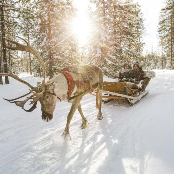 Reindeer-sleigh-ride-Santa-Claus-Village-Rovaniemi-Lapland