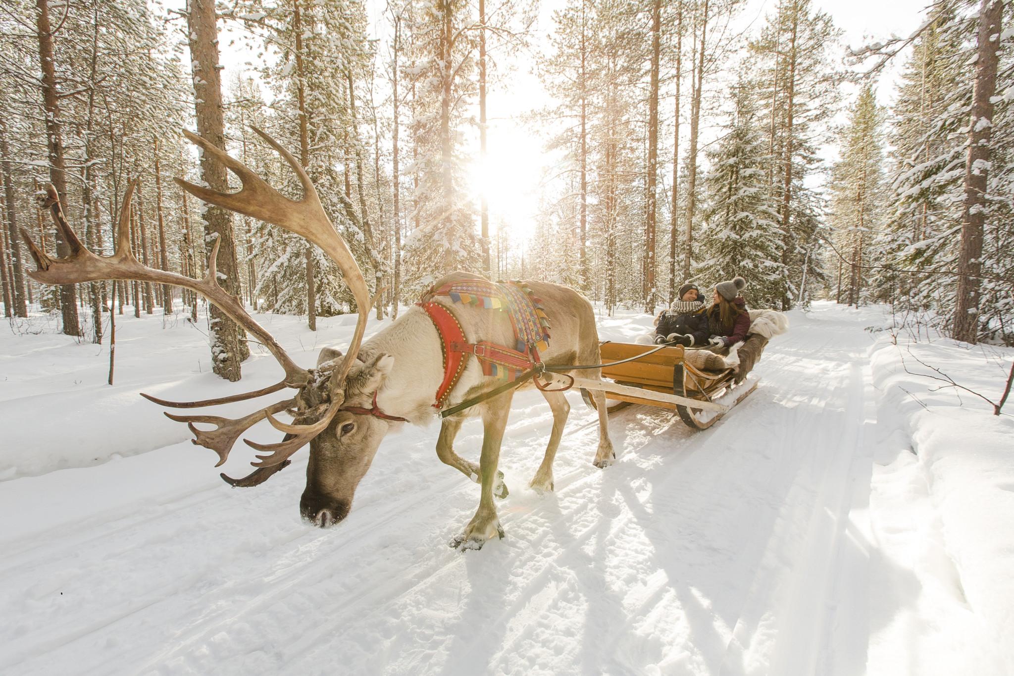 reindeer sleigh ride in Rovaniemi lapland finland