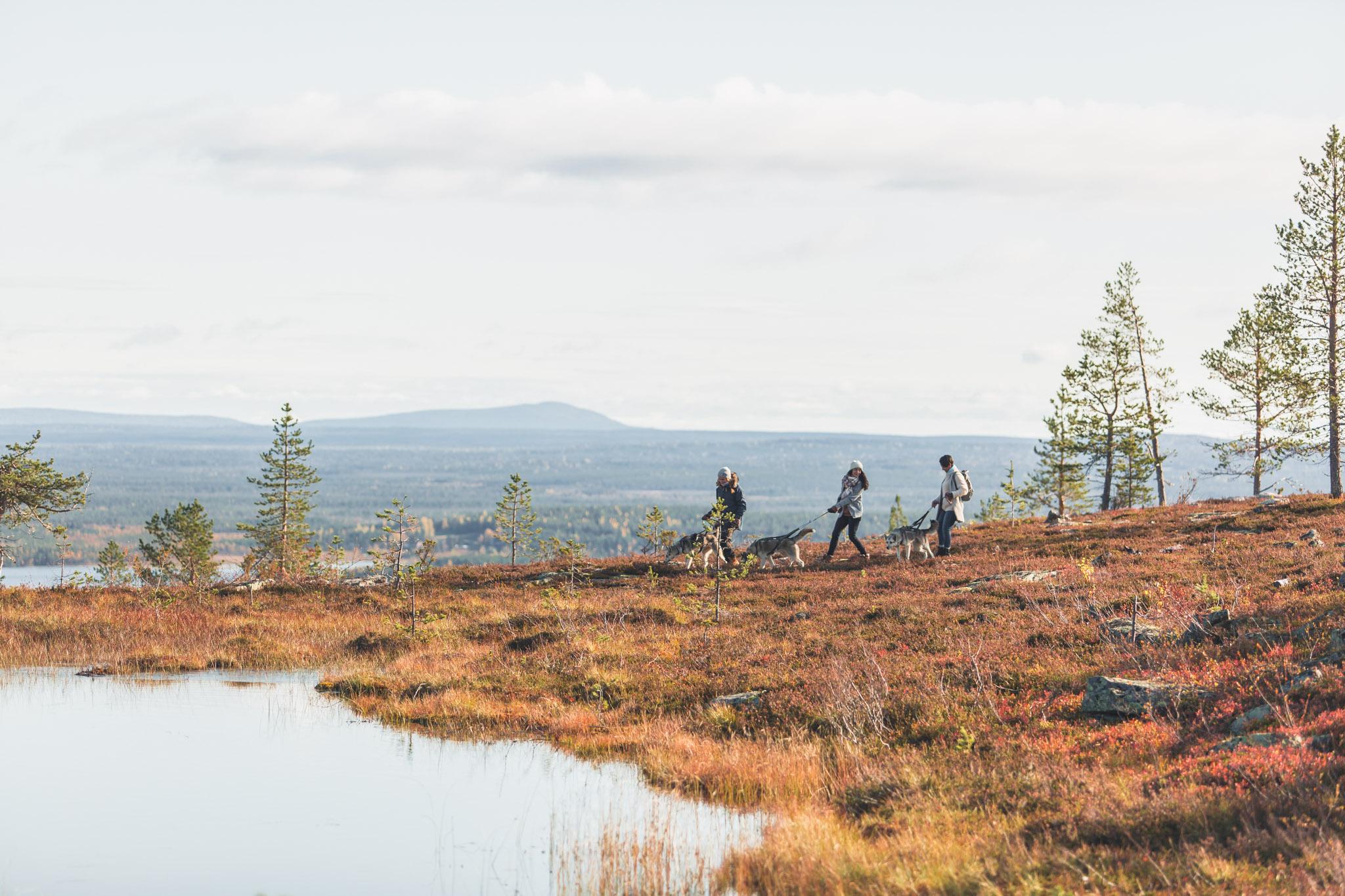 Autumn colors in Lapland Rovaniemi Finland