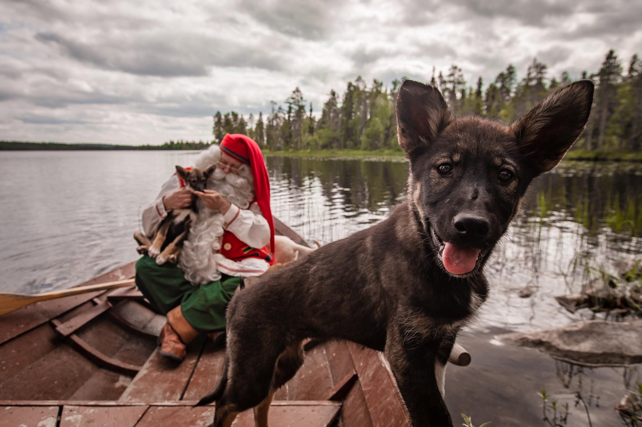 Santa Claus with Huskies. Bearhill Husky Kennel in Rovaniemi Lapland Finland.