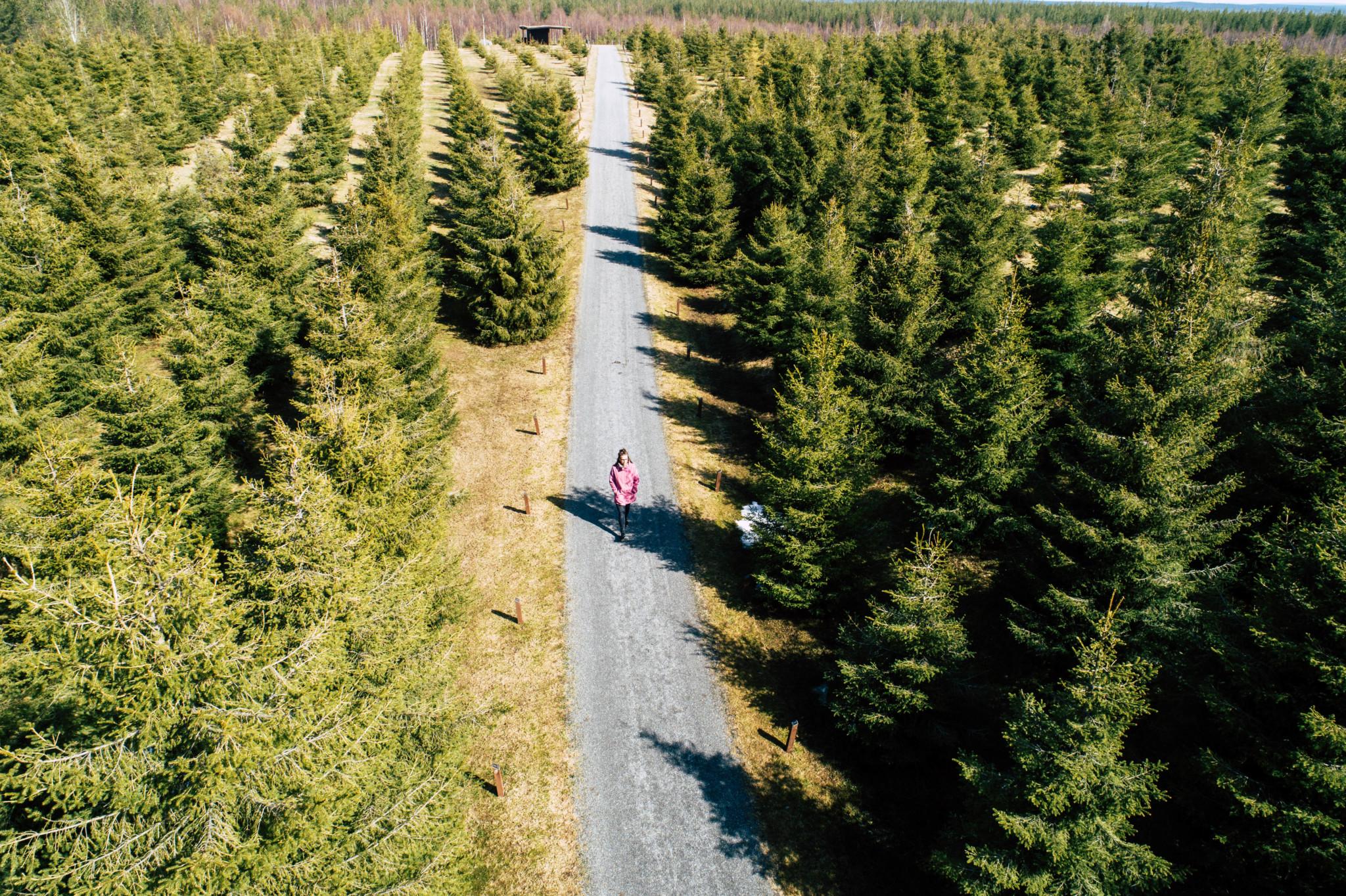 Joulupukin metsä, Rovaniemi