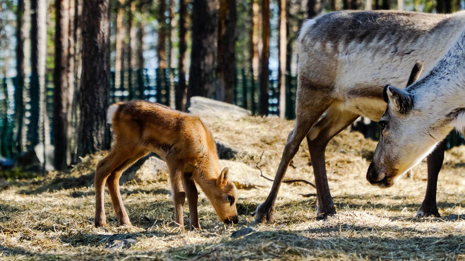 Summer 2019 Rovaniemi Lapland Finland