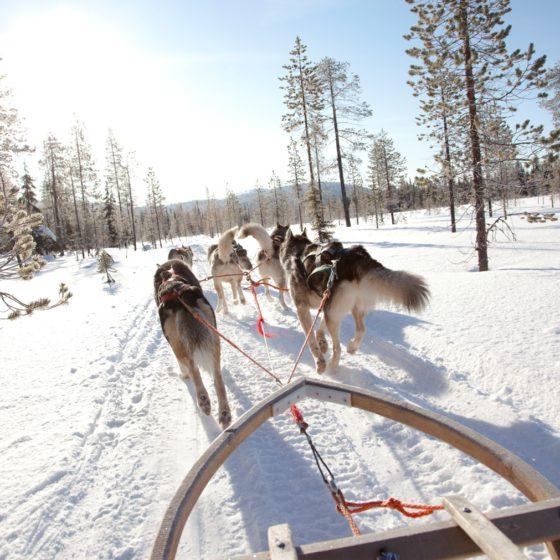 Viada Lapland DMC in Rovaniemi, Lapland, Finland