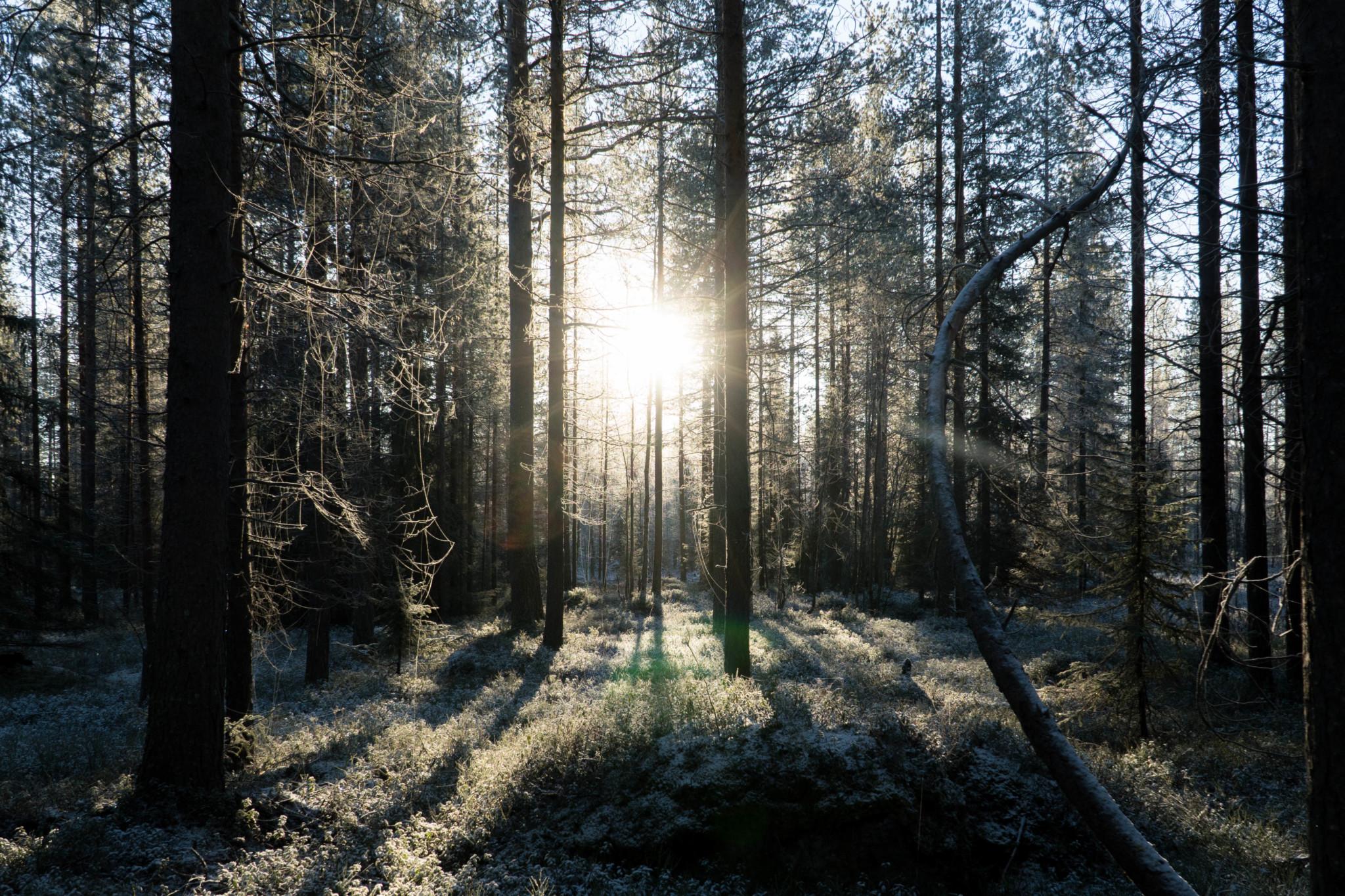 Go hiking in Rovaniemi Lapland Finland