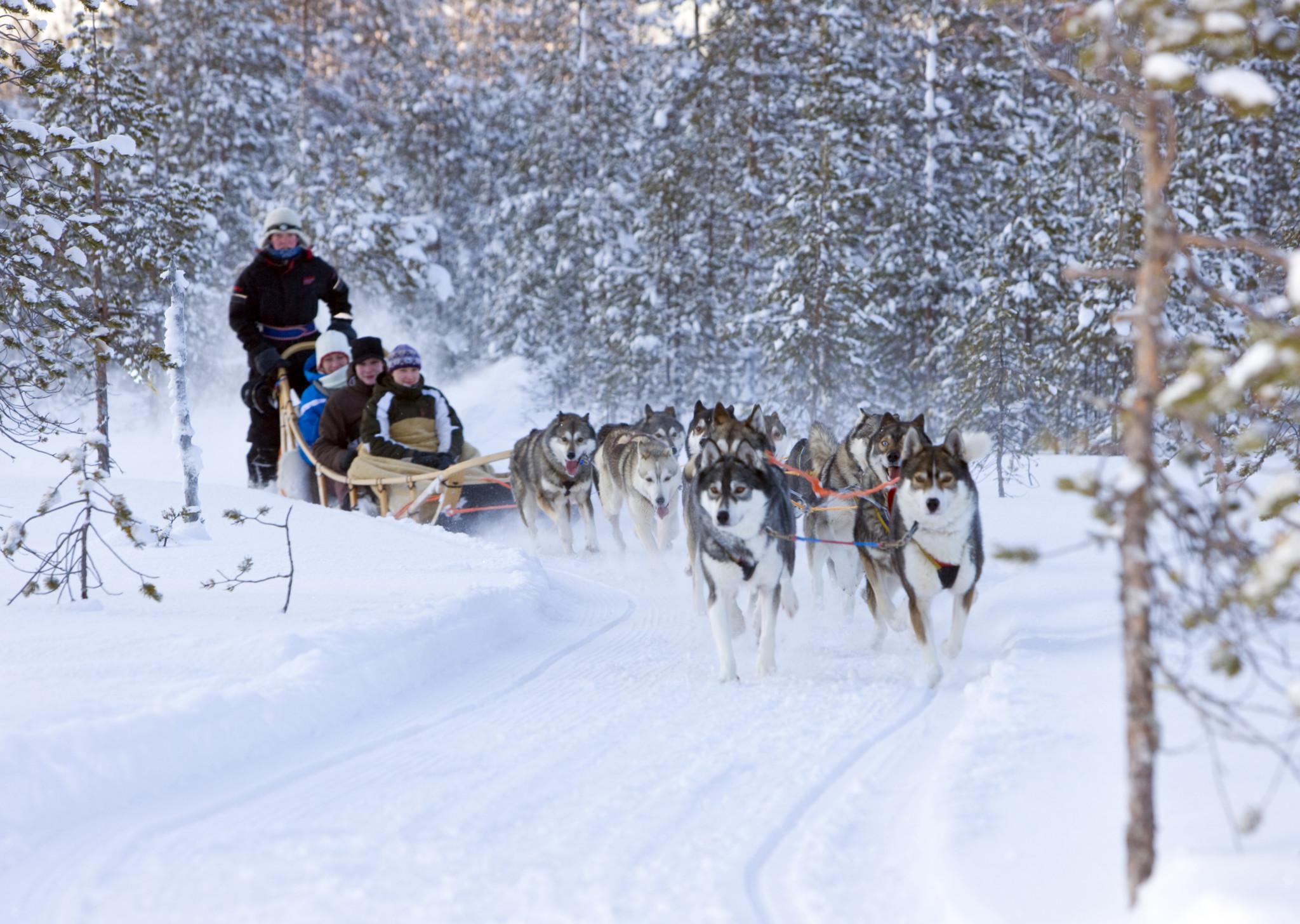 Dog sledding Rovaniemi Lapland Finland