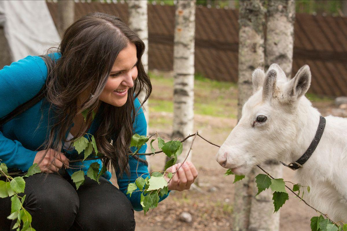 reindeer farm visit Rovaniemi Lapland Finland
