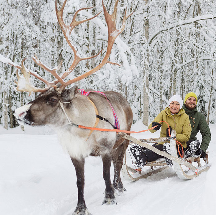 Reindeer ride program by Rovaniemi Congresses in Lapland, Finland