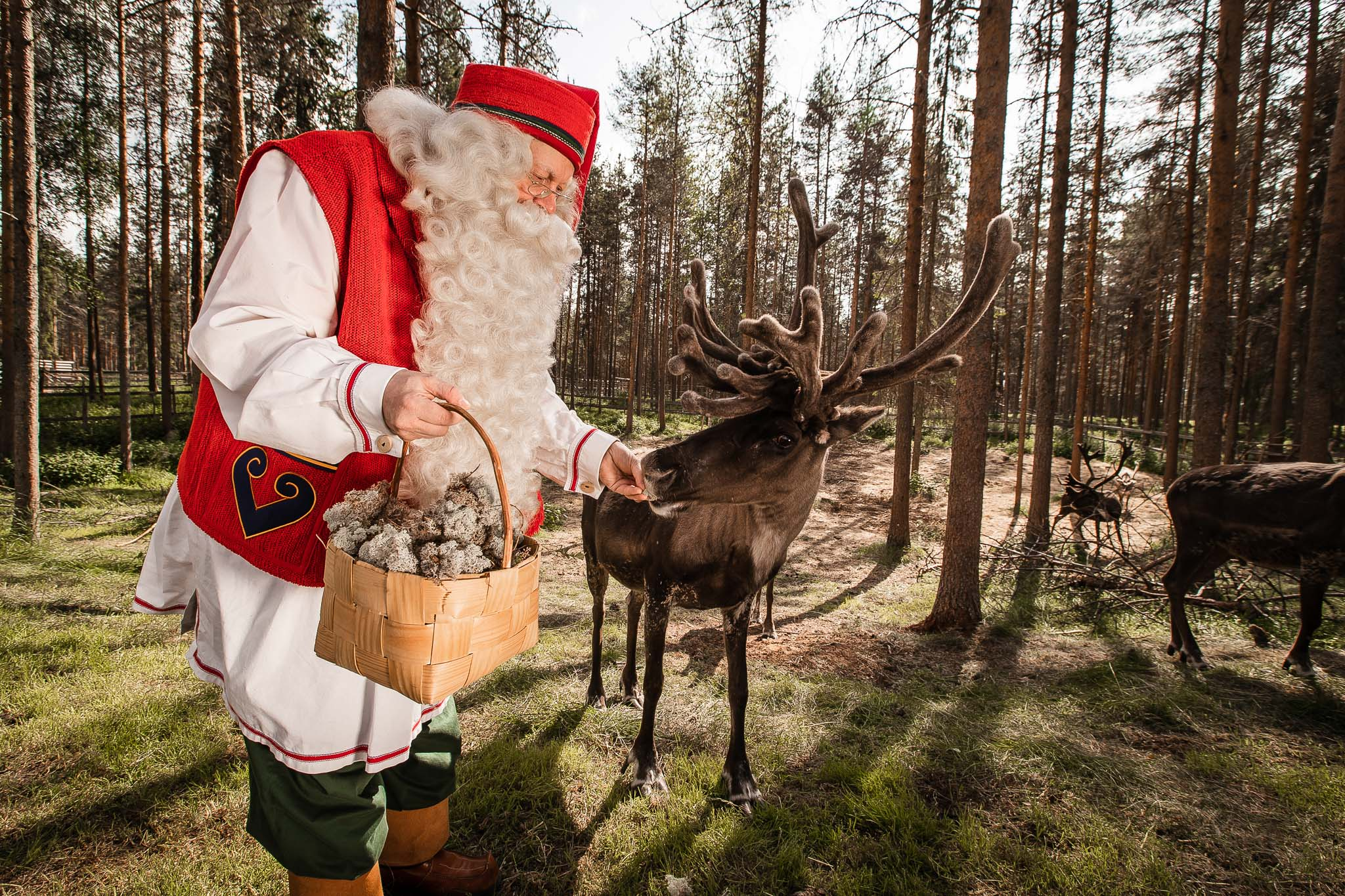 Santa Claus Feeding Reindeer Visit Rovaniemi Lapland Finland. Photo by Alexander Kuznetsov / All About Lapland