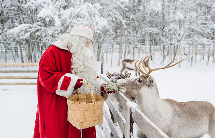 Santa Claus feeding his reindeer in Rovaniemi, the Official Hometown of Santa Claus in Lapland