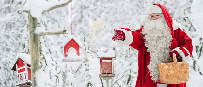 Santa Claus feeding the birds in his Official Hometown Rovaniemi, Lapland, Finland