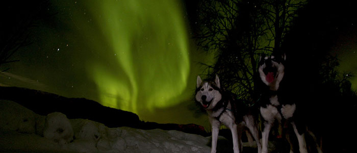 visit-rovaniemi-bearhillhusky-northern-lights
