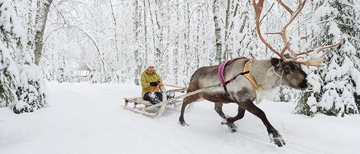 Reindeer sleigh ride in a white snowy forest in Rovaniemi, the Official Hometown of Santa Claus