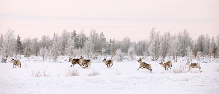 Lapland destinations - Salla