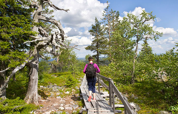 Hiking up Lampivaara fell in the summer in Luosto, close to Rovaniemi, Lapland, Finland