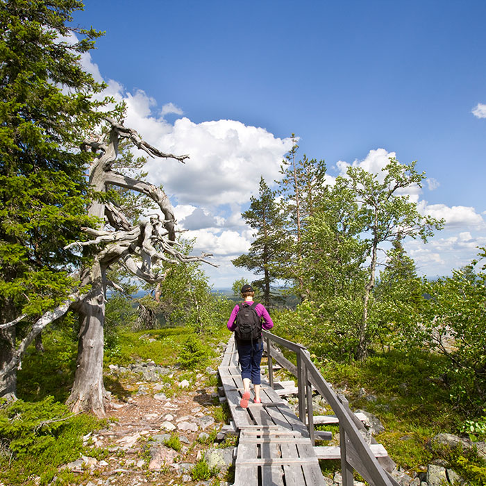 Hiking up Lampivaara fell to the Amethyst Mine in Luosto near Rovaniemi, Lapland, Finland