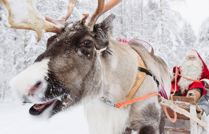 Santa Claus riding in a sleigh pulled by a reindeer in Rovaniemi,, Lapland, Finland