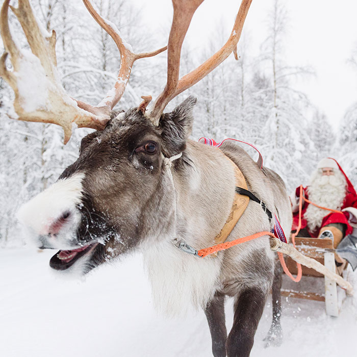 Santa Claus on a reindeer sleigh ride in Rovaniemi, Lapland, Finland